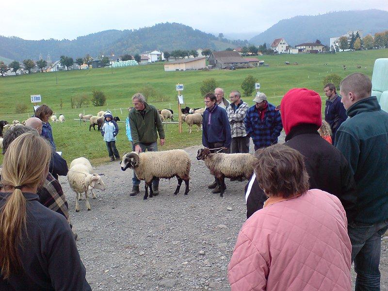 Widderschau 2008