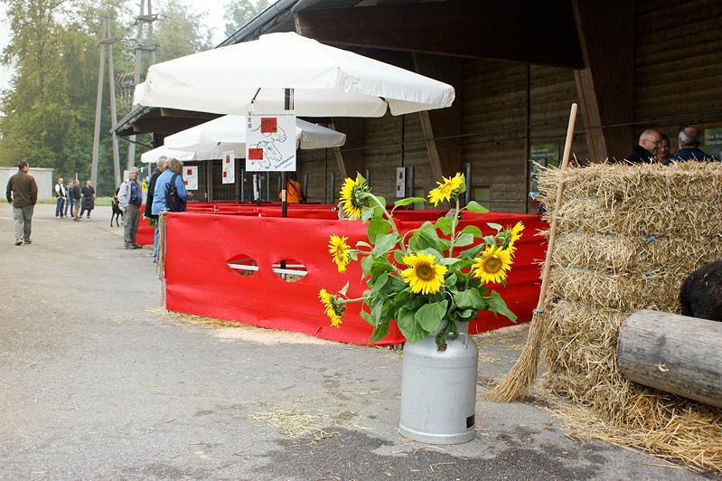 Widderschau 2011