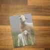 Kartenset Bündner Oberländer Schaf