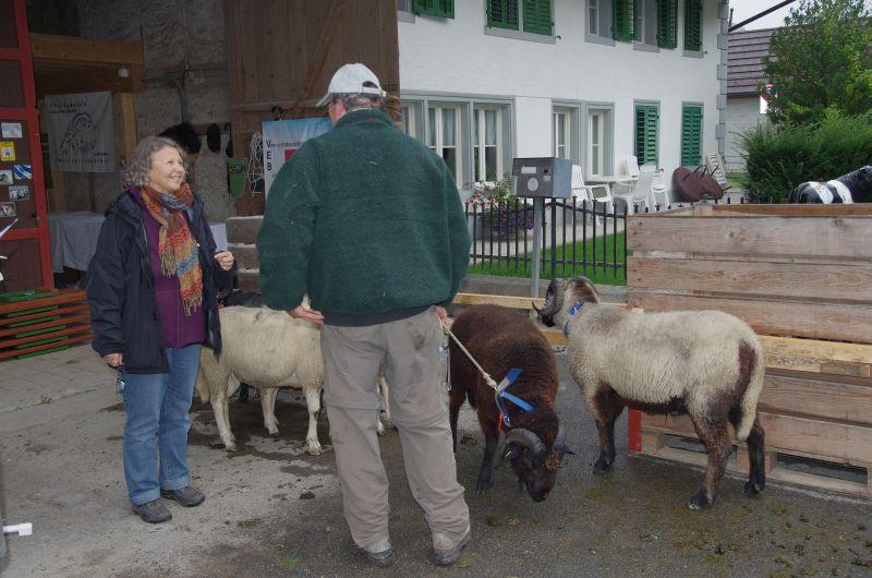 Widderschau 2012
