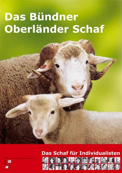 Schaf Junges