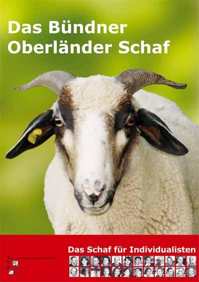 Schaf Schwarzohr