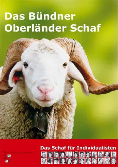 Schaf Weisshorn