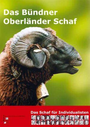 Plakat Schaf dunkel