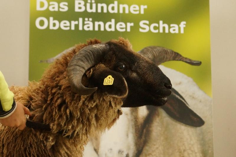 Widderschau 2013