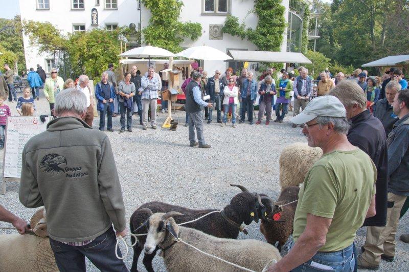 Widderschau 15 PSR k 6